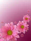 Pink flowers. Mother's day card Royalty Free Stock Photography