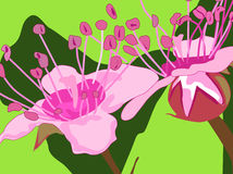 Pink flowers. Vector illustration of pink flowers Royalty Free Stock Photography