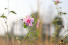 Pink flowers along the way. Stock Photography