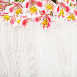 Pink flowers Alstroemeria on light background Royalty Free Stock Photos