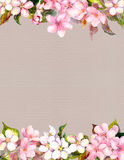 Pink flowers - apple, cherry blossom. Floral frame for background. Watercolour Stock Image