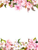 Pink flowers - apple, cherry blossom. Floral frame for postcard. Watercolor Royalty Free Stock Image