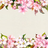 Pink flowers - apple, cherry blossom. Floral frame for postcard. Watercolour on paper background Royalty Free Stock Photos