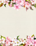 Pink flowers - apple, cherry blossom. Floral frame. Watercolour on paper Royalty Free Stock Image