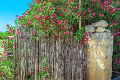 Pink flowers around the fence in Malta Royalty Free Stock Images
