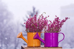 Pink Flowers arranged on the mini watering can Stock Image