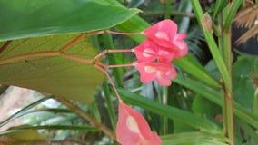 Pink Flowers in Arrow Diagram Stem Geometry Shape royalty free stock image