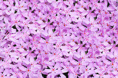 Pink flowers background. Vibrant pink colored flowers background Stock Photo