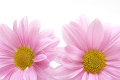 Pink flowers background Stock Image