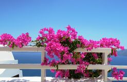 Pink flowers on a background of blue sea Stock Photo