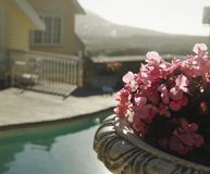 Pink flowers on the background of the pool and houses, South Africa, selective focus Royalty Free Stock Image