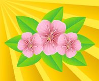 Pink flowers on a background sunbeams Stock Images