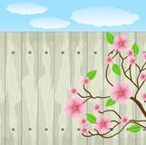 Pink flowers on a background a wooden fence Royalty Free Stock Photos