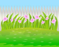 Pink flowers on a background a wooden fence Royalty Free Stock Image