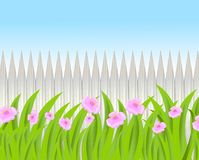 Pink flowers on a background a wooden fence Royalty Free Stock Photography