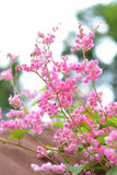 Pink flowers and bees Royalty Free Stock Images