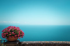 Pink flowers and bird-eye view at sea Stock Photos