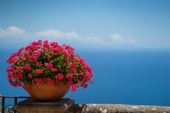 Pink flowers and bird-eye view at sea Stock Photography