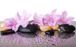 Pink flowers and black stones Stock Photography