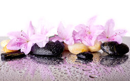 Pink flowers and black stones royalty free stock photos