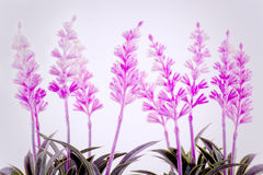 Pink flowers in bloom Royalty Free Stock Photo