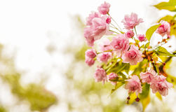 Pink flowers blooming stock photography