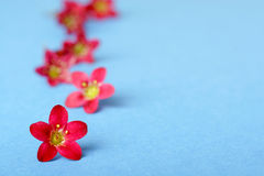Pink flowers on blue Stock Photos