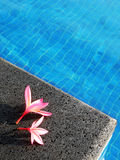 Pink flowers by blue pool, tropical resort hotel. Relaxing on summer vacation - An image showing two red pink tropical flowers, plumeria, by the side of a blue stock images