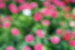Pink flowers blurred background. Defocused abstract back Stock Photography