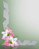 Pink flowers Border Amaryllis. Image and illustration composition of beautiful Amaryllis flowers in full bloom, white ribbons background for wedding, Easter Stock Photography