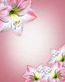 Pink flowers Border Amaryllis stock illustration