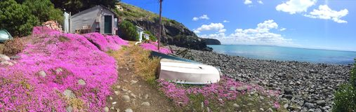 Pink flowers at Boulder Bay, Christchurch, New Zealand stock image