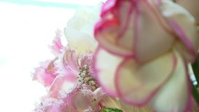Pink Flowers stock video footage