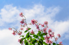 Pink flowers and branch in nature background blue sky days Stock Images
