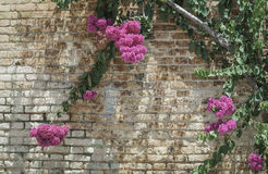 Pink flowers on brick wall as a border. With copy space Stock Image