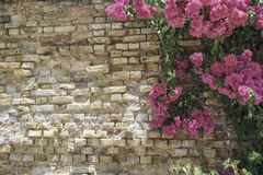 Pink flowers on brick wall as a border. With copy space Royalty Free Stock Photos