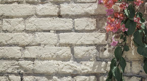 Pink flowers on brick wall as a border. With copy space Royalty Free Stock Images