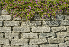 Pink flowers and brick wall. In Tivat, Montenegro Stock Photography