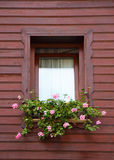 Pink flowers in brown window. Isolated shot of pink flowers in wooden brown window Stock Image