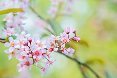Pink flowers on the bush. Shallow depth of field. Stock Image
