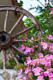 Pink flowers bush and wooden wheel summer vacation post card. Pink flowers bush and old wooden wheel summer vacation post card Royalty Free Stock Photo