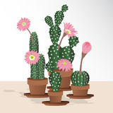 Pink flowers of Cactus collection on pots. Sketchy style illustration. Succulent set. Vector illustration royalty free illustration