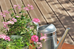 Pink flowers an can water on a terrace Stock Photos