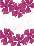 Pink Flowers Card Center Space_eps. Illustration of pink colors flowers card, center space is your sample text Royalty Free Stock Image