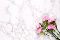 Pink flowers carnations on marble table top view and flat lay style. stock images