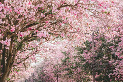 Pink flowers or cherry blossom and tree. In springtime stock images