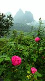 Pink flowers with China mountain landscape Stock Images