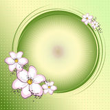 Pink flowers and circle Royalty Free Stock Photography