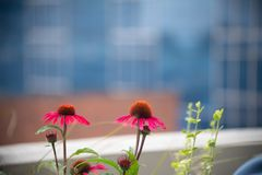 Pink flowers in a city garden stock photography