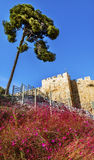 Pink Flowers City Walls Near Lions Gate Jerusalem Israel. Pink Flowers Near City Walls Jerusalem Israel Royalty Free Stock Photo
